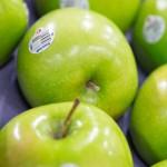 りんごの栄養は皮にある!1日1個で健康、医者いらず!