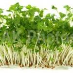 ブロッコリースプラウトの効果効能|若返りに効く食べ方