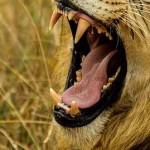 口内炎を治す方法|口内炎に効く飲み物と食べ物