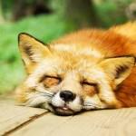 寝たい時に寝る方法|眠れない時はどうする?