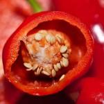 ピーマンの栄養と効果効能|赤ピーマンが栄養価が高い!
