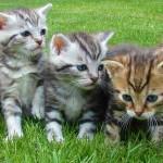 猛暑対策2016年・猫の暑さ対策編|猫の熱中症に要注意!