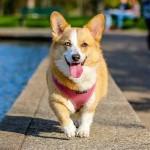 猛暑対策2016年・犬の暑さ対策編|犬の目線で体調管理を!