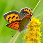 ブタクサアレルギーの症状と時期|秋のブタクサ花粉症対策はコレ