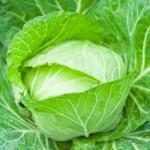 キャベツ加熱で栄養減少?栄養素を効率的に摂る方法は?