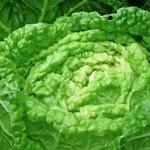 白菜を加熱すると栄養は減るの?