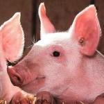 豚肉は生で食べると危険!豚肉は加熱する時間と温度が大切!