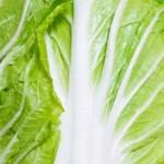 白菜の黒い点々ぶつぶつは何?白菜の黒い斑点は安全ですか?