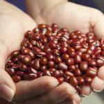 小豆の煮方|小豆は土鍋で!圧力鍋や炊飯器より栄養効果アップ!