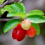 レッドフルーツの栄養ビタミンと美容・美白効果が見逃せない!