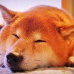 熱帯夜 布団を工夫して快眠対策|寝具と快眠グッズはこれ!