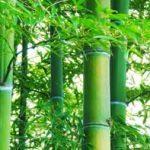 食用竹炭パウダーの効果効能は?デトックス効果と飲み方食べ方